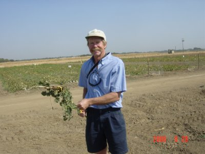 Weed Twister vs Mallow UC Davis Dr. Tom Lanini